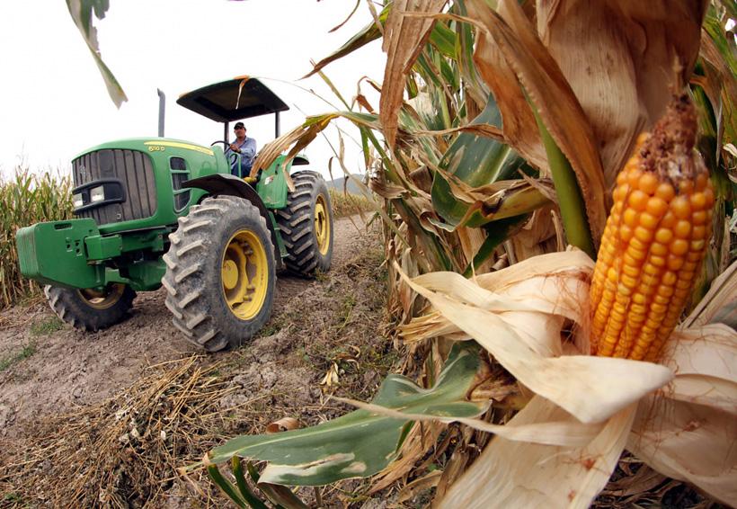 Cambia de proveedor: México compra más maíz a Brasil que a EU | El Imparcial de Oaxaca
