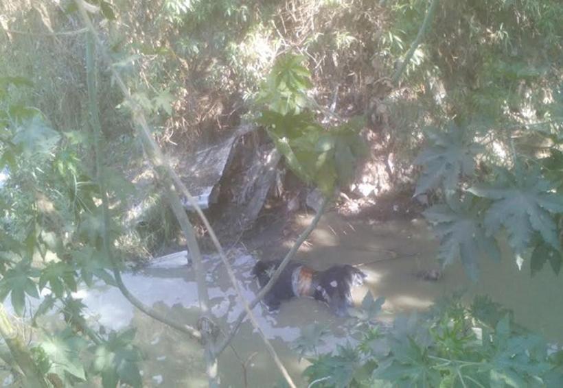 Encuentran cuerpo de un hombre asesinado dentro de una barranca | El Imparcial de Oaxaca