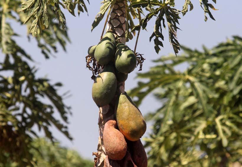 Consolida Oaxaca su producción agroalimentaria   El Imparcial de Oaxaca