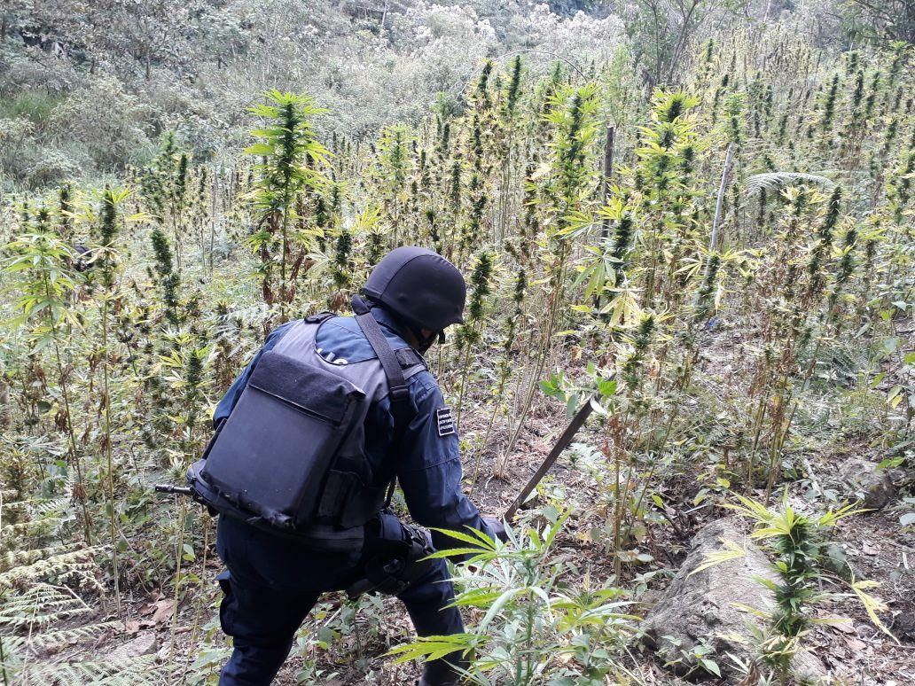 Los detienen con hierba en Candelaria Loxicha, Oaxaca | El Imparcial de Oaxaca