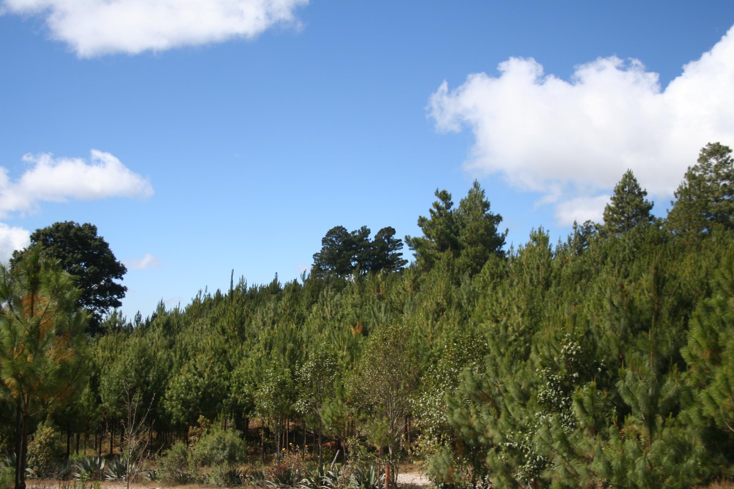 Urge defender bosques ante deterioro medioambiental en Oaxaca   El Imparcial de Oaxaca