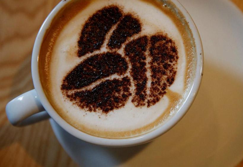 Cosas que pasan en tu cuerpo cuando tomas mucho café | El Imparcial de Oaxaca