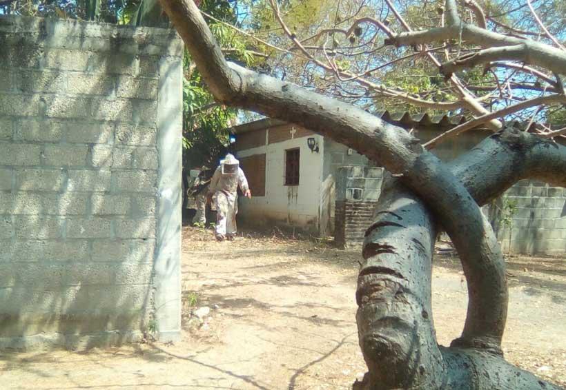 Abejas aterrorizan  a vecinos de Bamba, Oaxaca