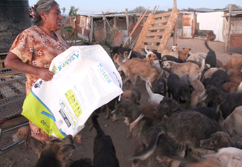 Atraen atención para  el albergue canino de la Villa de Zaachila, Oaxaca | El Imparcial de Oaxaca
