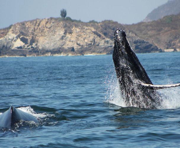 Ballena hunde embarcación en la Costa de Oaxaca