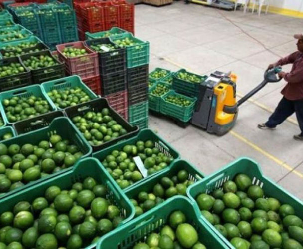 Potencializa Tuxtepec producción de limón