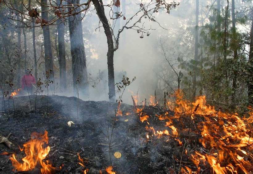 Amenazados, los bosques de Oaxaca por indolencia gubernamental | El Imparcial de Oaxaca