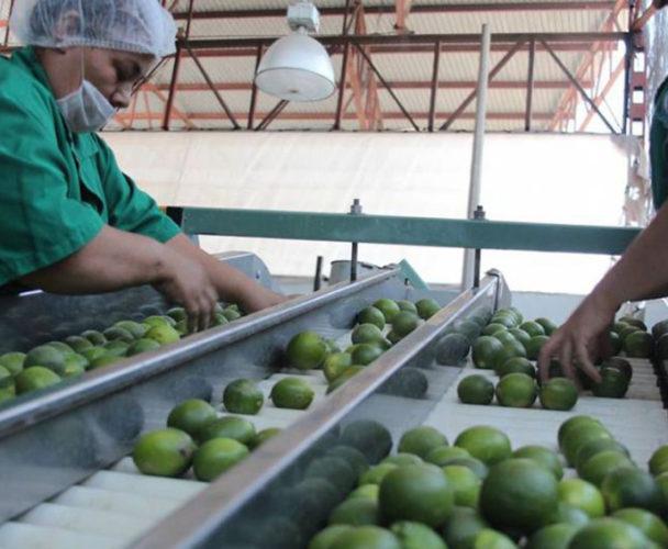 Industria agrícola de Tuxtepec  recibirá inversión privada