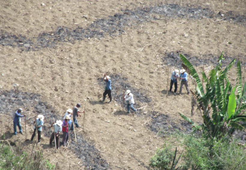 Mazatecos comienzan con siembra de maíz | El Imparcial de Oaxaca