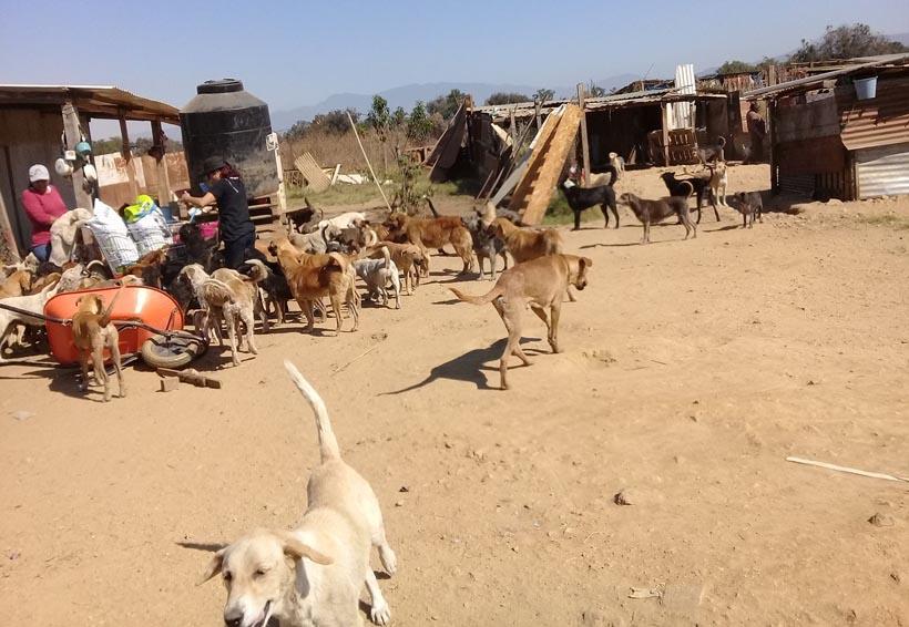 Niegan maltrato animal  en el refugio canino de Zaachila, Oaxaca