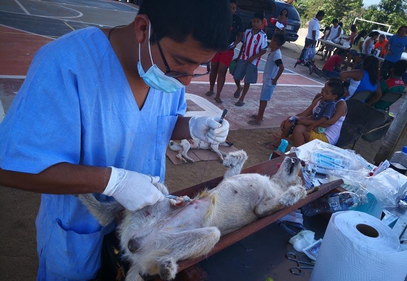 Realizan jornada de esterilización canina en la Costa de Oaxaca | El Imparcial de Oaxaca