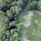 Lanzan plataforma digital para monitoreo forestal