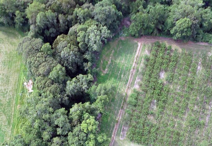 Lanzan plataforma digital para monitoreo forestal   El Imparcial de Oaxaca