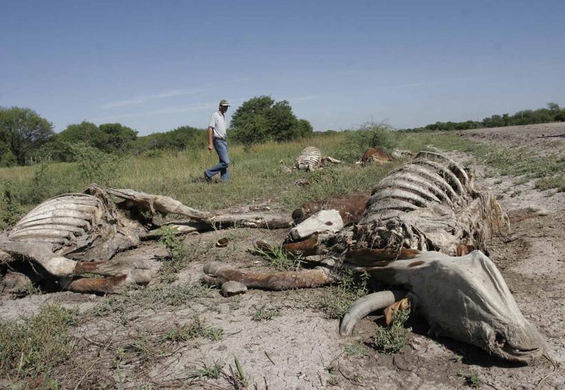 Desplazados, 3 millones de mexicanos por el cambio climático: FMI | El Imparcial de Oaxaca