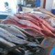 Pescados y mariscos a bajo costo en colonias de Oaxaca