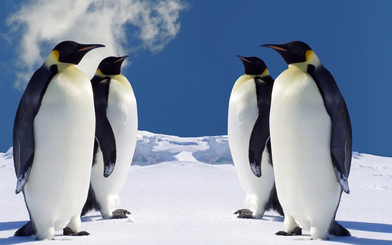 Son hallados 1.5 millones de pingüinos en el Antártico | El Imparcial de Oaxaca