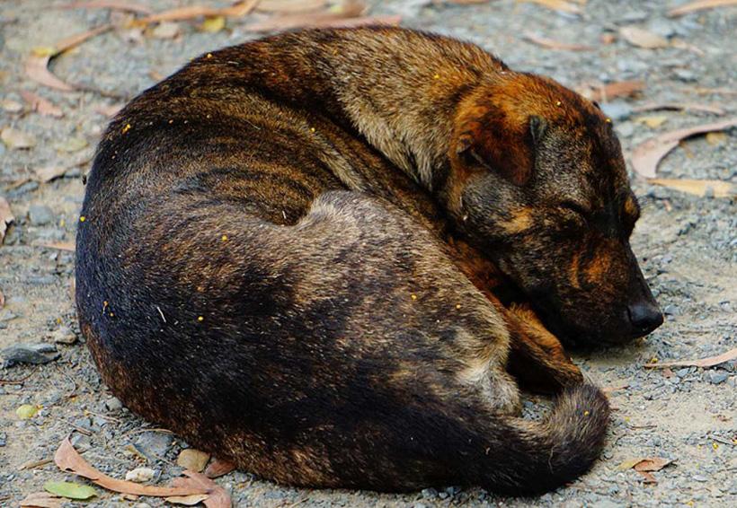 Animales: sus derechos, a expensas de la buena voluntad en Oaxaca | El Imparcial de Oaxaca