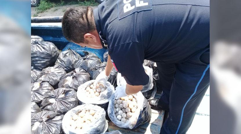 Cae con casi 23 mil huevos de tortuga en carretera Coatzacoalcos-Salina Cruz | El Imparcial de Oaxaca