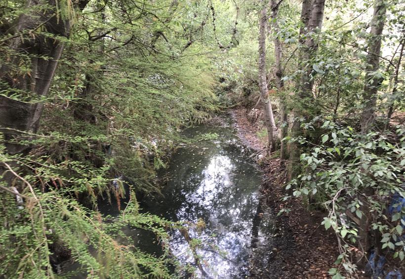 Urgen vecinos a Río San Diego  frenar contaminación del agua