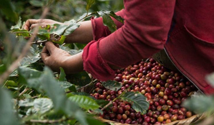 Atenderán a productores de café de Oaxaca | El Imparcial de Oaxaca