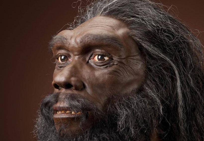 Las cejas: un punto importante en la evolución del hombre | El Imparcial de Oaxaca