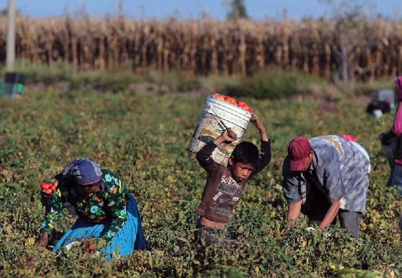 Urge defender a los jornaleros agrícolas en Oaxaca | El Imparcial de Oaxaca