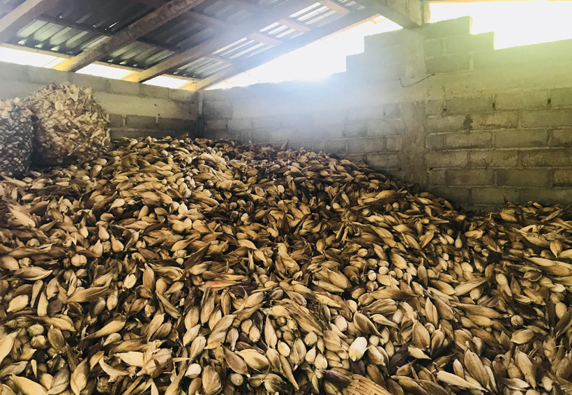 Capacitan para preservar   cosecha de maíz zapalote