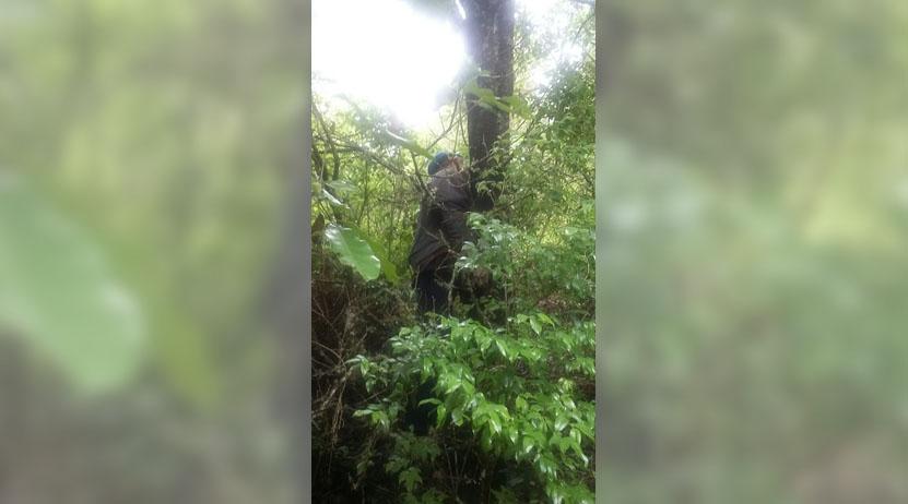 Se suicida hombre en bosque en la Sierra Mixe, Oaxaca | El Imparcial de Oaxaca