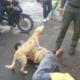 Video: Perro protege a su dueño borracho durante toda la noche