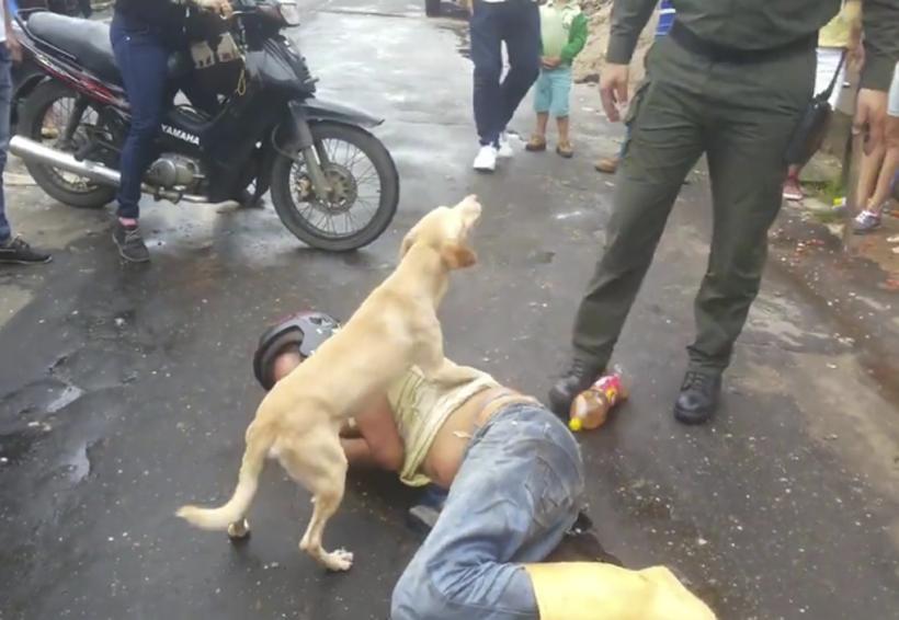 Video: Perro protege a su dueño borracho durante toda la noche | El Imparcial de Oaxaca