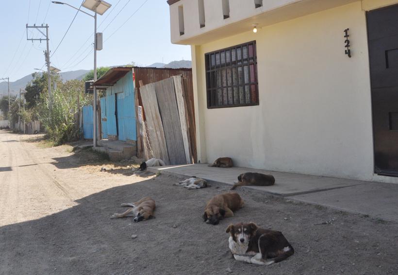 Retrasan tres meses jornada de vacunación antirrábica en Oaxaca | El Imparcial de Oaxaca