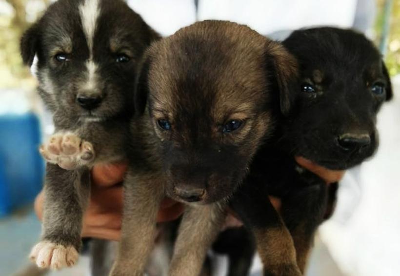 Caninos y felinos encuentran hogar en la Mixteca de Oaxaca