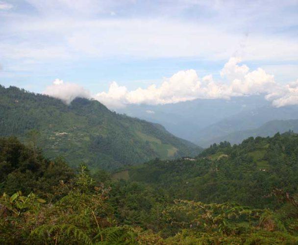 Favorecen la reforestación en la Costa de Oaxaca