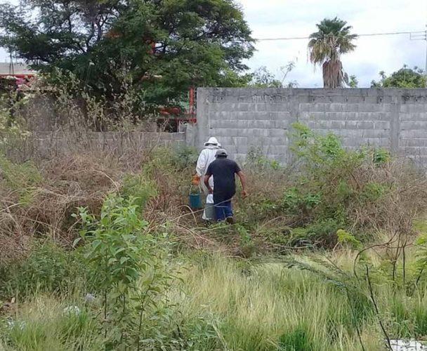 Atacan abejas a vecinos en el Istmo de Oaxaca
