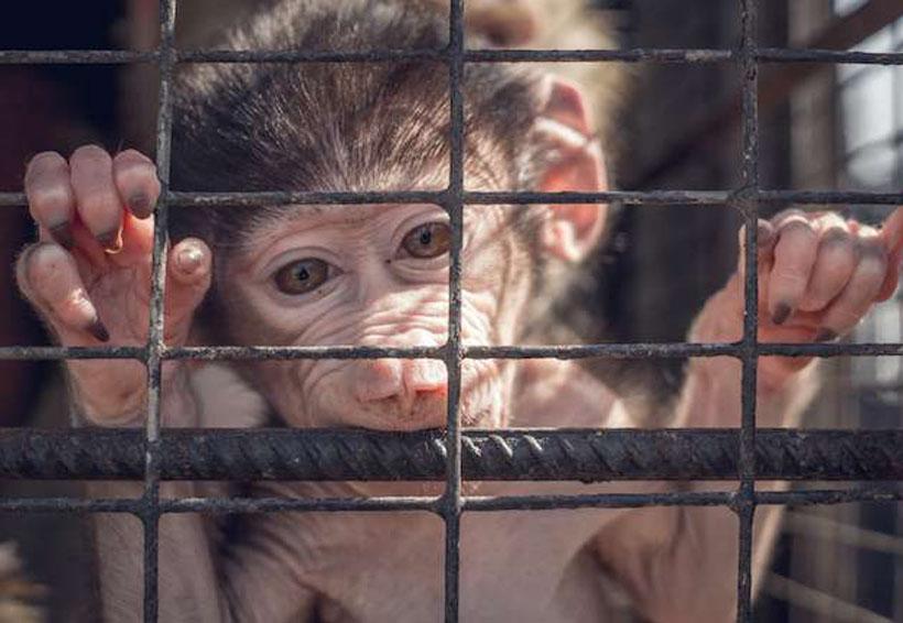 ¿Y qué hay del sufrimiento animal para los avances de la ciencia? | El Imparcial de Oaxaca