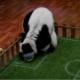 Video: Spartak, el lemur profeta del Mundial
