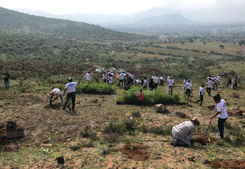 Confían cumplir con meta de reforestación en Oaxaca | El Imparcial de Oaxaca