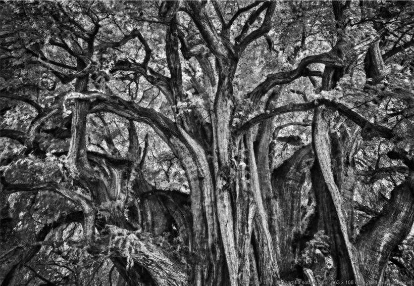 Evocación al paisaje se muestra en el CCSD | El Imparcial de Oaxaca
