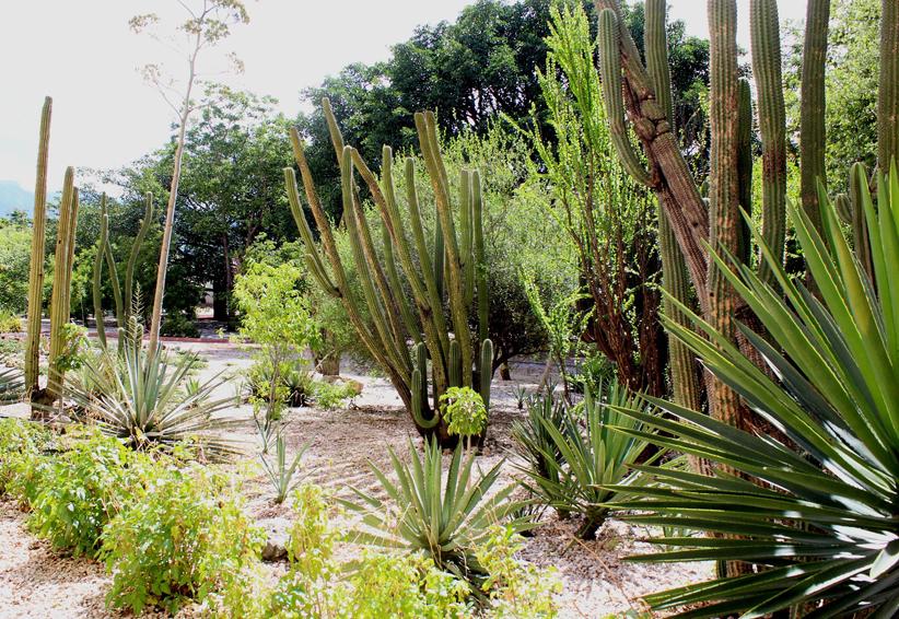Celebran Día Mundial del Jardín Etnobotánico en Oaxaca | El Imparcial de Oaxaca