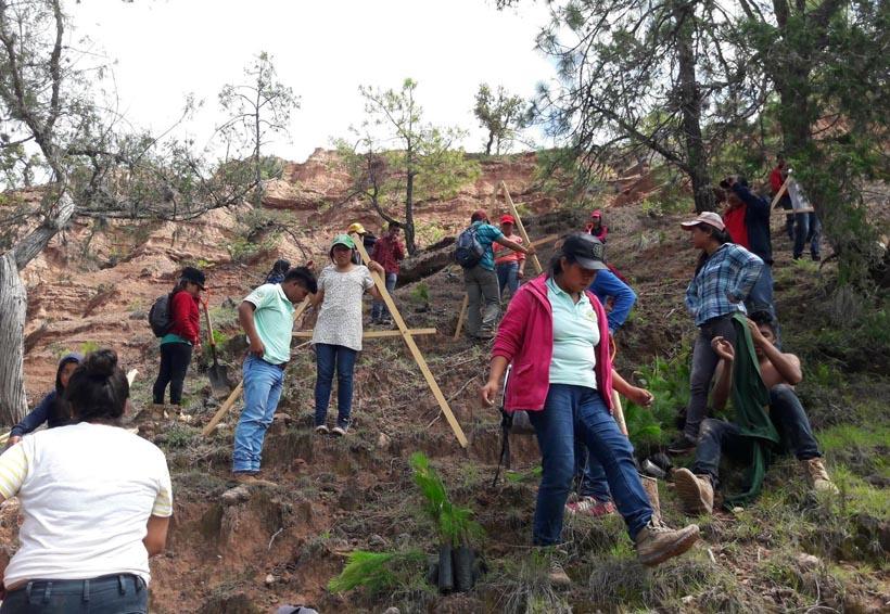Impulsa el ITSMIGRA  la reforestación