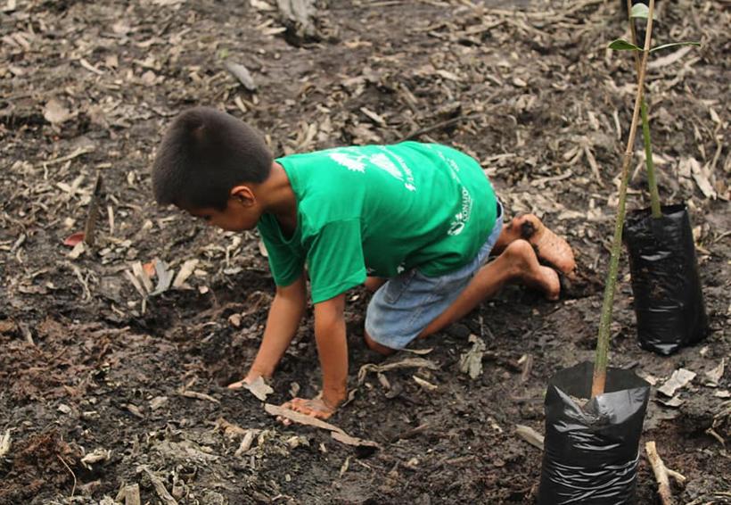 Reforestan manglares en La Ventanilla, Tonameca