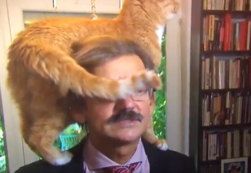 Video: Gato arruina entrevista de su dueño | El Imparcial de Oaxaca