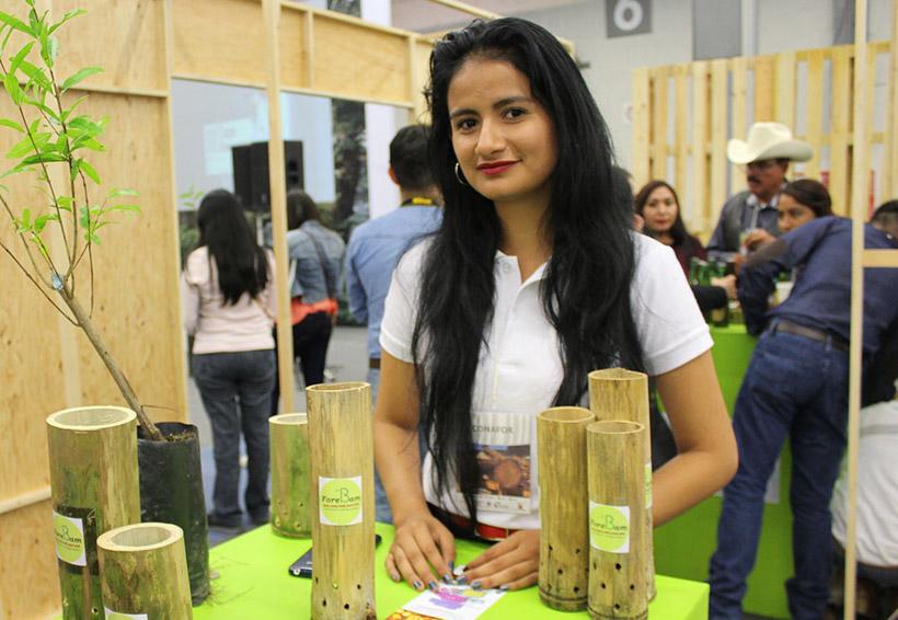 Confirma Conafor 85% de ocupación en Expo Forestal 2018 | El Imparcial de Oaxaca