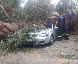 En Naucalpan, árbol cae sobre auto y mata a cuatro personas