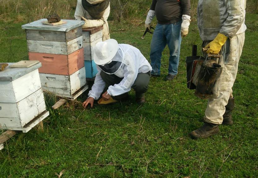 Por fumigación con químico, mueren miles de abejas en Quintana Roo | El Imparcial de Oaxaca