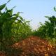 """Incremento de la producción y autosuficiencia alimentaria, los enfoques para """"rescatar al campo"""": AMLO"""