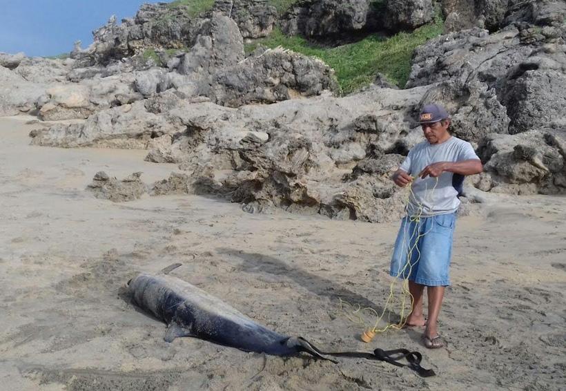 Aparece delfín muerto en la playa en Puerto Escondido