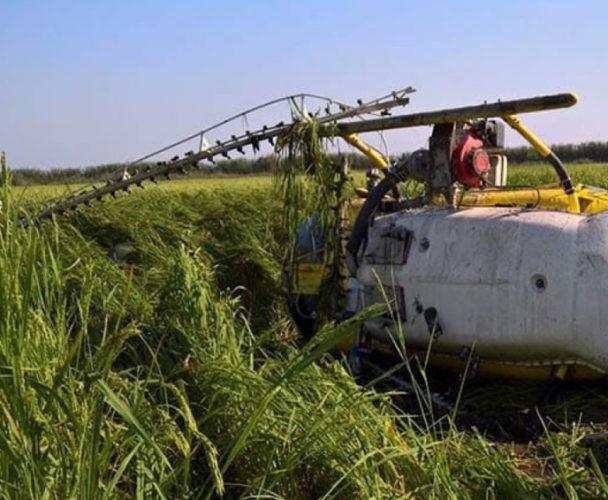 Se desploma helicóptero de fumigación en Ojitlán, Oaxaca