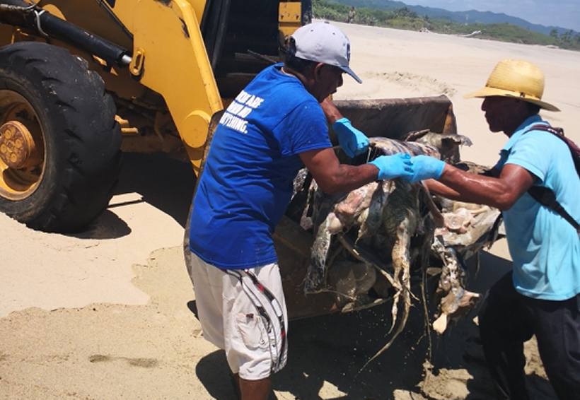 Ecocidio en las playas de Oaxaca