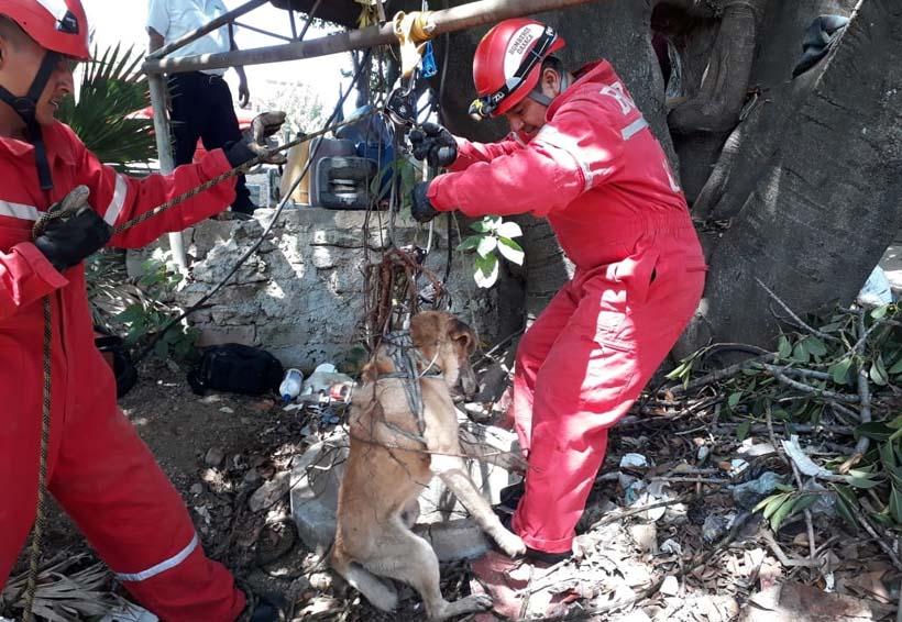 En San Luis Beltrán rescatan a canino de  profundo  pozo